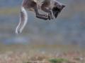 Polarrev hopper
