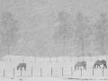 Hester i snøvær lavoppløst 9388