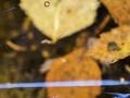 2_Ingebjørg-Fyrileiv-Guldvik_MG_1755