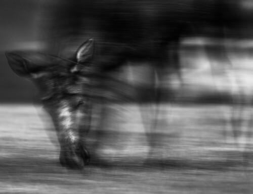 Ukens bilde, Steve Halsetrønning