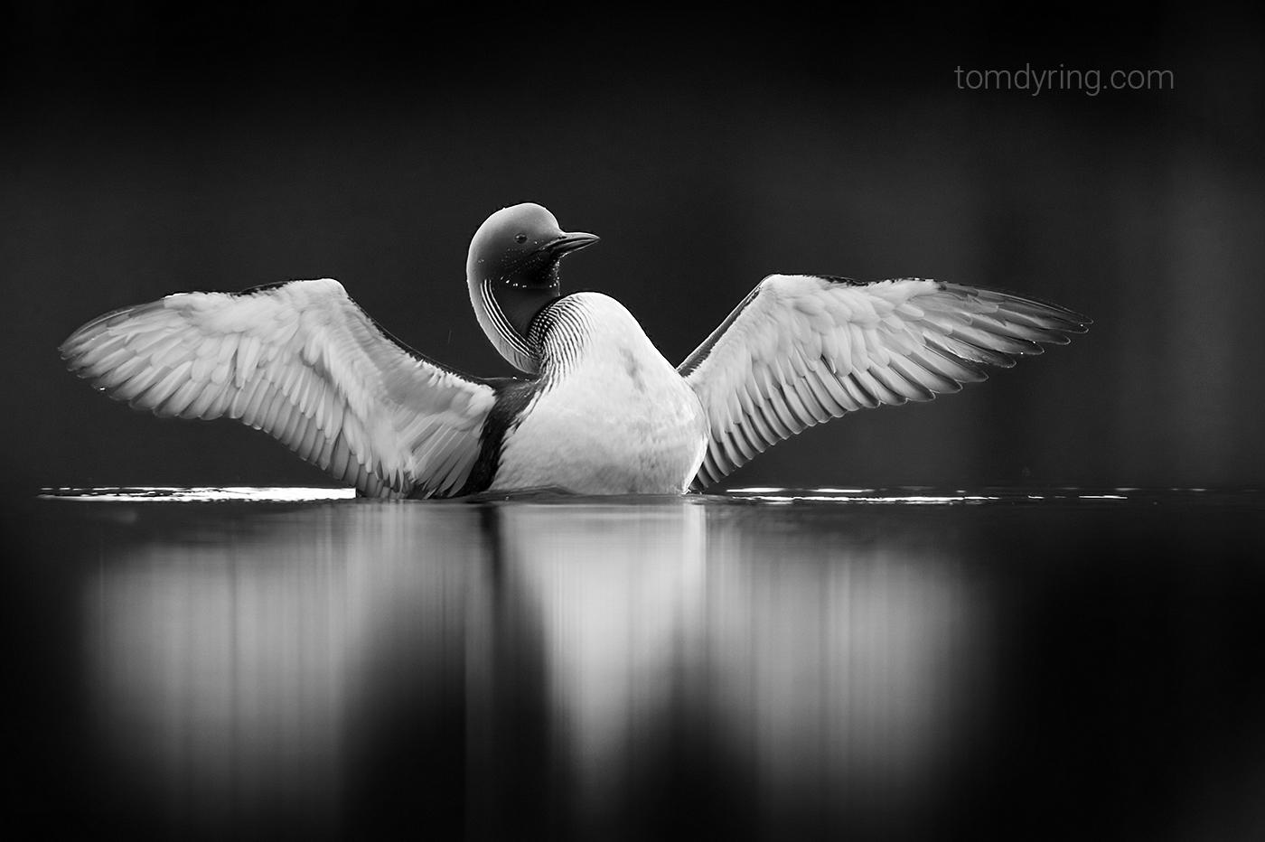 Foto: Tom Dyring