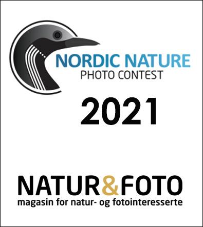 NNere premiert i NNPC 2021